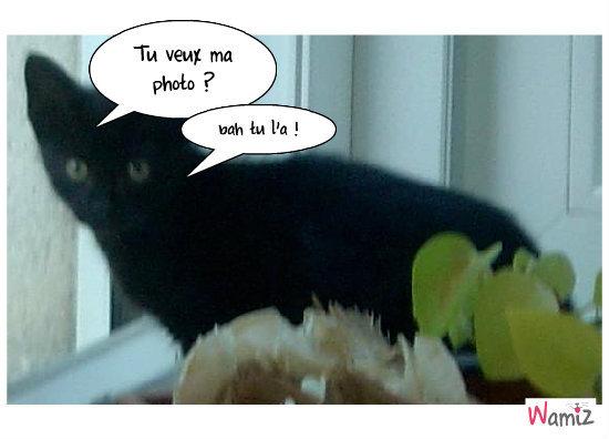 Tu veux ma photo ?, lolcats réalisé sur Wamiz