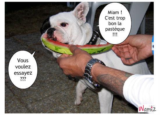 Caméo adore la pastéque !!!, lolcats réalisé sur Wamiz