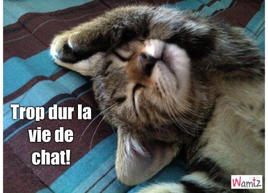Quelle vie de chat!!!, lolcats réalisé sur Wamiz