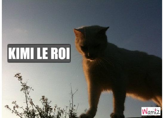 Kimi roi des chats, lolcats réalisé sur Wamiz