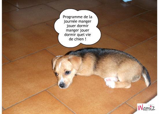 vie de chien , lolcats réalisé sur Wamiz