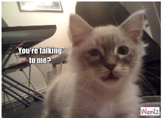 Talking to me?, lolcats réalisé sur Wamiz