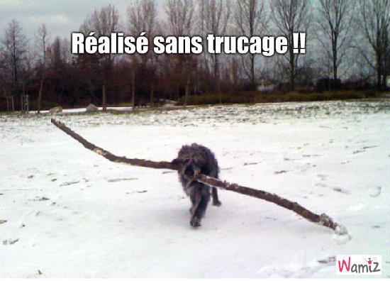 Hagrid le chien le plus fort du monde !, lolcats réalisé sur Wamiz