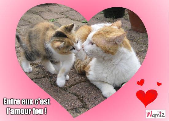 Bisous de chats, lolcats réalisé sur Wamiz
