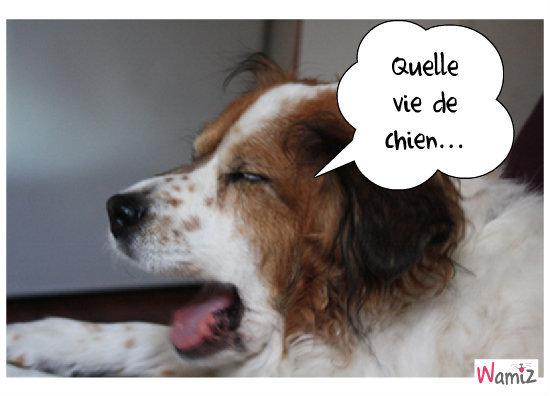 Quelle vie de chien..., lolcats réalisé sur Wamiz