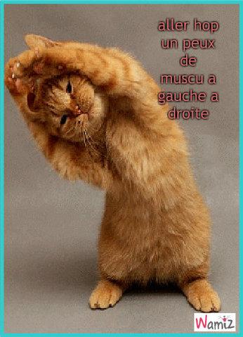 chat muscu, lolcats réalisé sur Wamiz