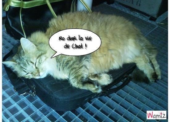 Pas facile d'être un chat , lolcats réalisé sur Wamiz