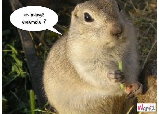 nuts, lolcats réalisé sur Wamiz