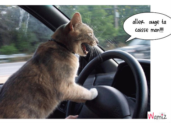 chat délir, lolcats réalisé sur Wamiz