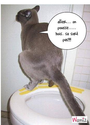 chat  besoin, lolcats réalisé sur Wamiz