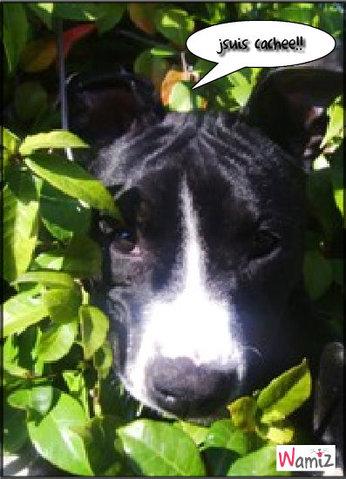 birdy le chien des plantes!, lolcats réalisé sur Wamiz