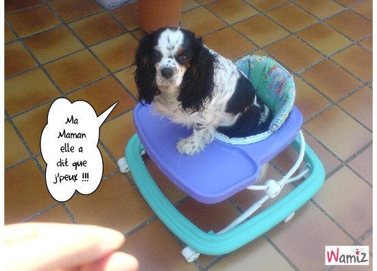 Bianca dans le trotteur, lolcats réalisé sur Wamiz