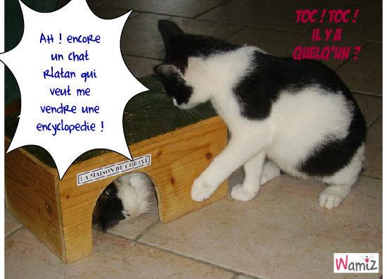 chat'rlatan, lolcats réalisé sur Wamiz