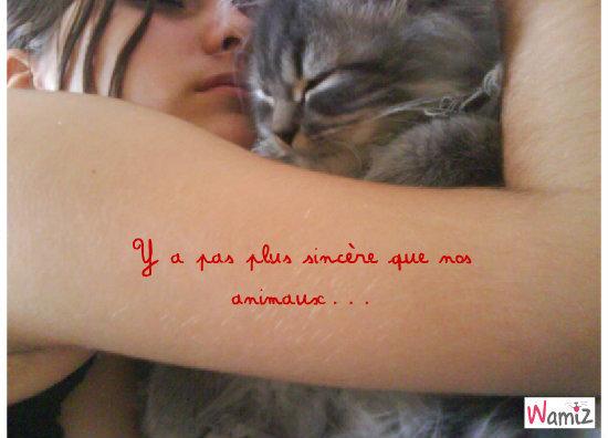 L'amour d'un chat, lolcats réalisé sur Wamiz