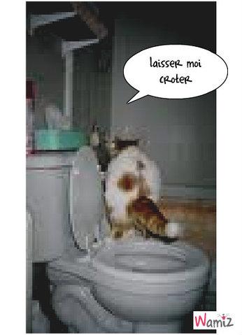 je vais au toilette, lolcats réalisé sur Wamiz