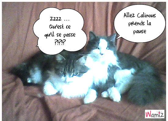Calinou et Garfield, lolcats réalisé sur Wamiz