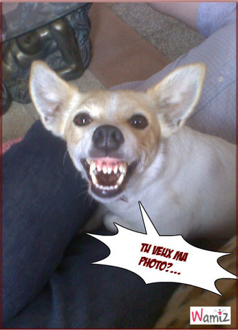 Tu veux ma photo?..., lolcats réalisé sur Wamiz