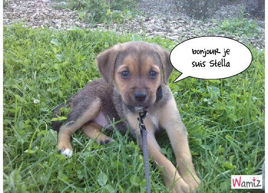 Stella, lolcats réalisé sur Wamiz