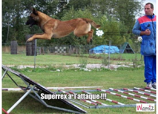superrex, lolcats réalisé sur Wamiz