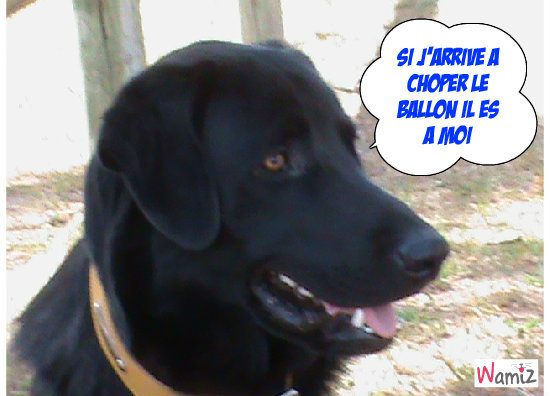 Un amour de chien , lolcats réalisé sur Wamiz