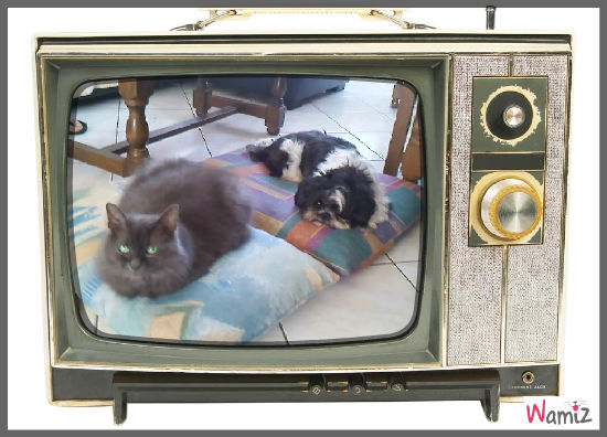 Comme chien et chat, lolcats réalisé sur Wamiz