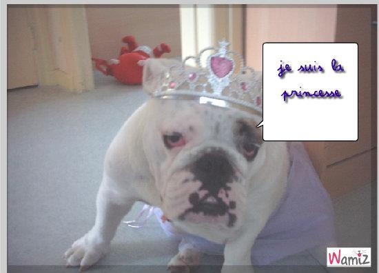 dixie la princessedixie la princesse, lolcats réalisé sur Wamiz