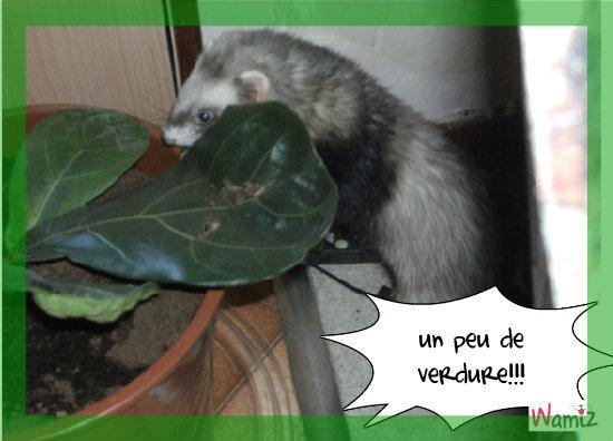 au secour!!! mes plantes!!!, lolcats réalisé sur Wamiz