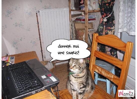 bastet et l'ordinateur, lolcats réalisé sur Wamiz