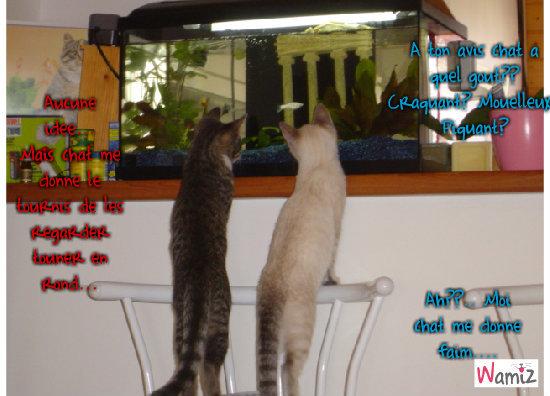 Discussion du petit poisson, lolcats réalisé sur Wamiz