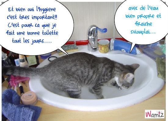 Chat qui clapote...chat propre!!, lolcats réalisé sur Wamiz