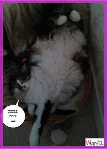Mon chat dort zzzzzzz, lolcats réalisé sur Wamiz