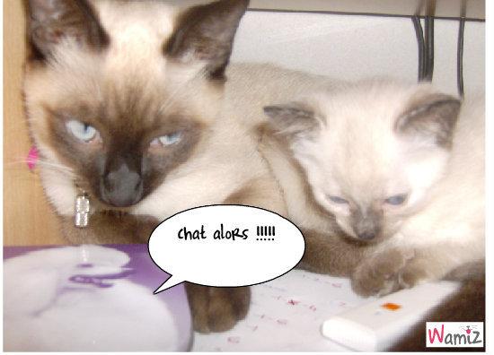 chat alrs , lolcats réalisé sur Wamiz