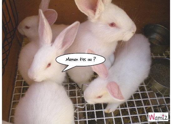 Bébés lapins cherchent maman ..., lolcats réalisé sur Wamiz