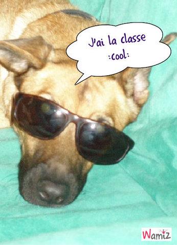 Cool dog !, lolcats réalisé sur Wamiz