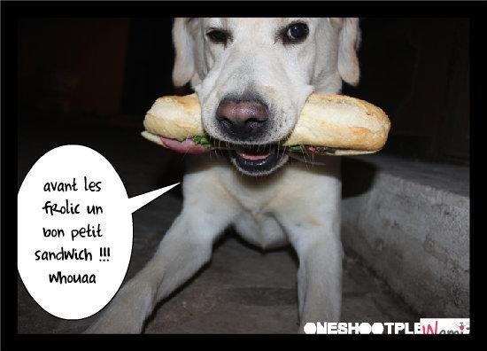 quel bon sandwich !, lolcats réalisé sur Wamiz