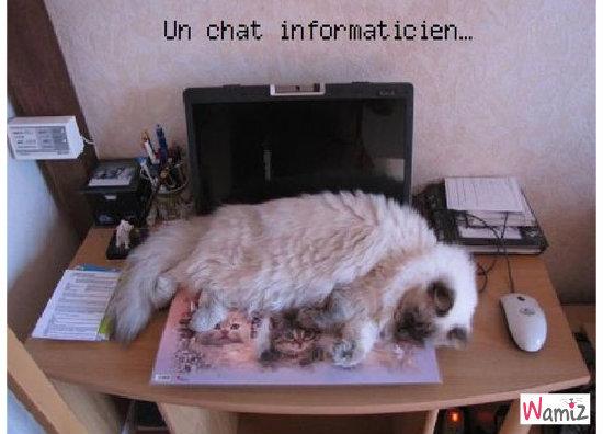 chat informaticien, lolcats réalisé sur Wamiz