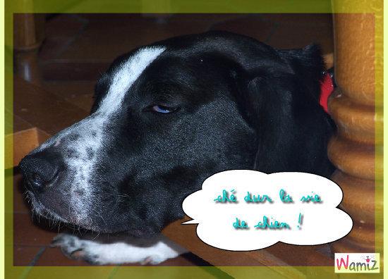 manger, dormire, sortire, manger, dormire, sortire = ces dur la vie de chien!, lolcats réalisé sur Wamiz