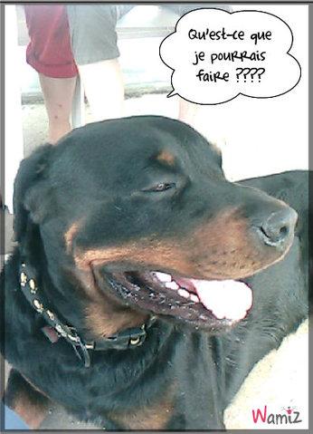 Mon chien Buddy, lolcats réalisé sur Wamiz