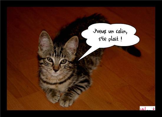 Dure la vie de chaton, lolcats réalisé sur Wamiz