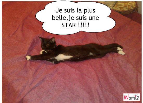 Mon chat fais sa belle , lolcats réalisé sur Wamiz