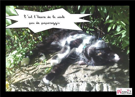 Chut il y a des chats qui dorment, lolcats réalisé sur Wamiz