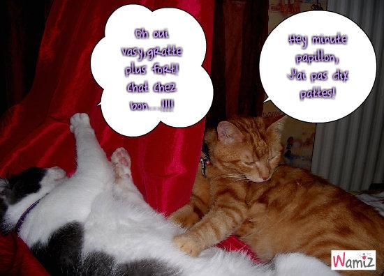 chat chez du grat grat!!!, lolcats réalisé sur Wamiz