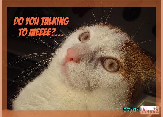 Do you talking to meee?..., lolcats réalisé sur Wamiz