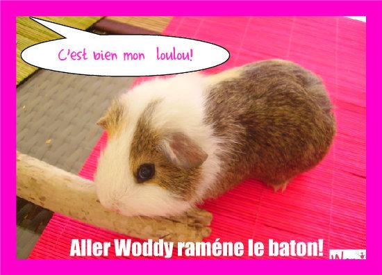 Un cochon d'inde trés obeisant!, lolcats réalisé sur Wamiz