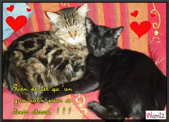 Deux amour de chats !!!, lolcats réalisé sur Wamiz
