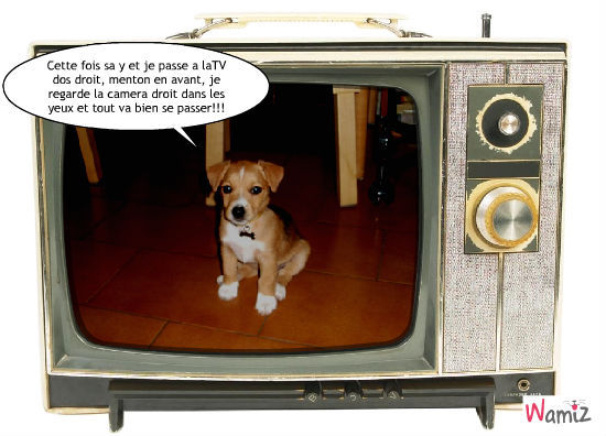 tv, lolcats réalisé sur Wamiz