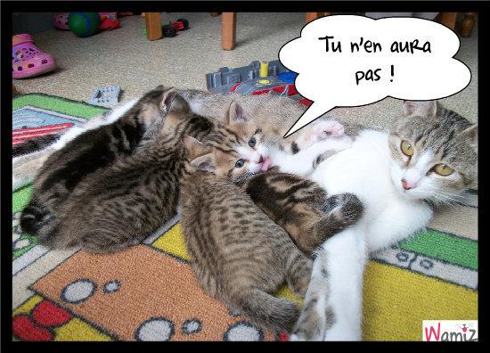 Réservé aux chatons !, lolcats réalisé sur Wamiz