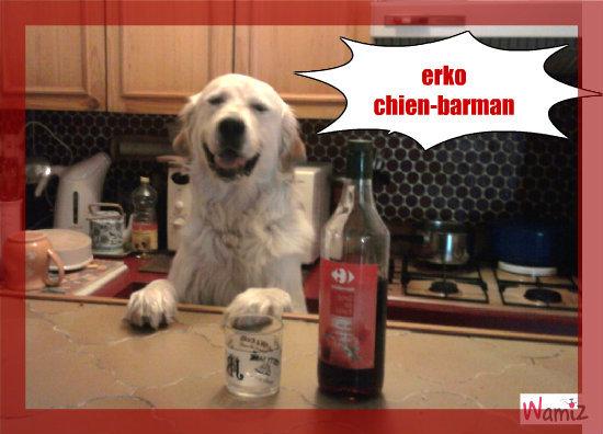 erko chien-barman, lolcats réalisé sur Wamiz