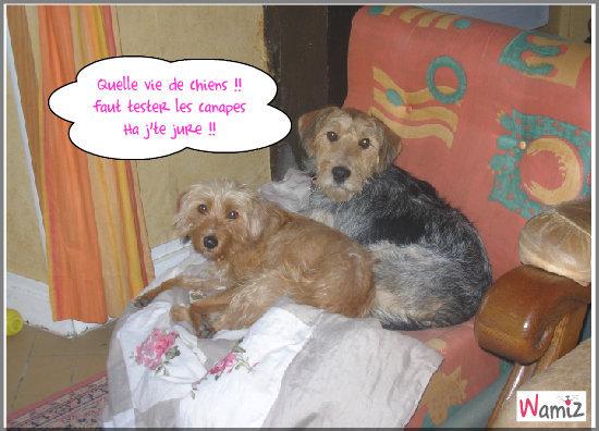 Vie de chiens, lolcats réalisé sur Wamiz