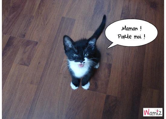 Maman !, lolcats réalisé sur Wamiz